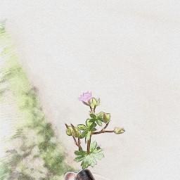 picsart photography flower