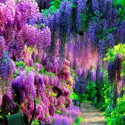 nature colourful trees scenary path ninahayess freetoedit
