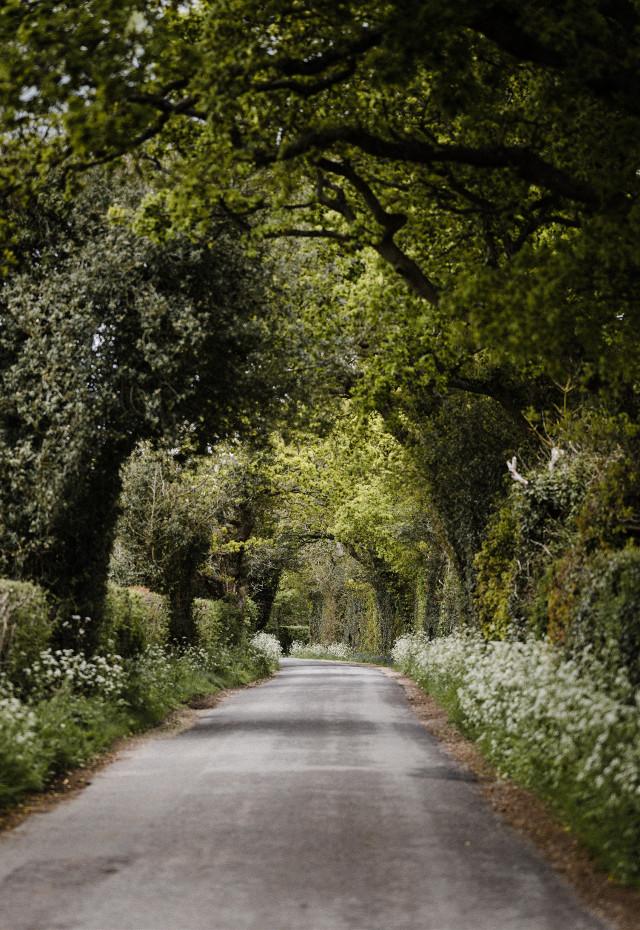 Showcase your editing skills Unsplash (Annie Spratt) #green #nature #forest #background #backgrounds #freetoedit