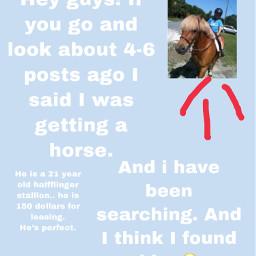eeek horse yayy freetoedit