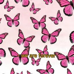 freetoedit pink fadedpink butterfly butterflies pinkbutterflies weareforever quote ninahayess ecdreamstickersbackground dreamstickersbackground