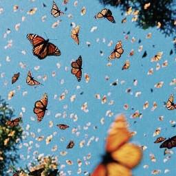 freetoedit butterflies imvustories27609