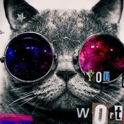 freetoedit cat sunglasses animal red blue youareworthit quote stars glittery grey silver cool ninahayess srcyouareworthit