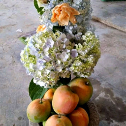 mango pccolorsisee colorsisee