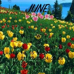 freetoedit june junecalender summer nature flowers sun trees colourful ninahayess srcjunecalendar2021 junecalendar2021