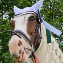 judy pferd lustig