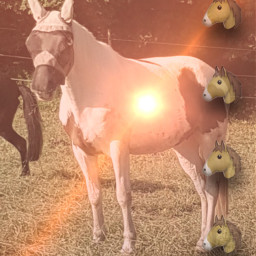 pferd judy