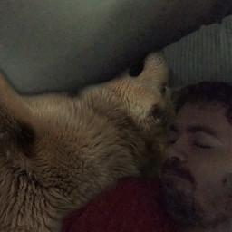 cuddles gaurddog philybear lifewithmalamutes phil mansbestfriend alaskanmalamute bigdog furry sadman depression lonely freetoedit