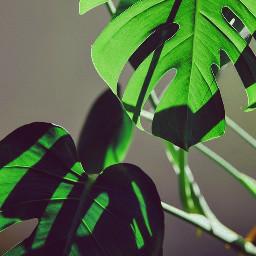 filter edit effect instagram filtereffect эстетиказеленого green greenedit love greencolor обработка фильтр эффект инстаграм greenfilter russia idea editgreen instamood insta beautiful beautyfilter like follow aesthetic freetoedit