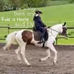 pferd freetoedit