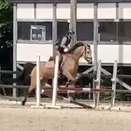 lucy_the_equestrian equestrian