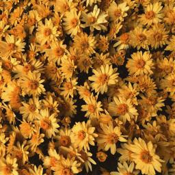 цветы желтый эстетика flower yellow aesthetic beautyfilter filter edit effect обработка красиво фильтр эффект beautiful instagram инстаграм freetoedit
