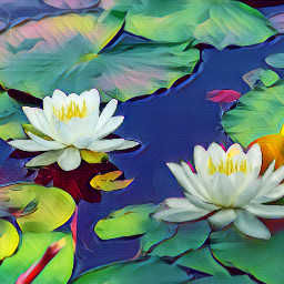 photo fxeffect freetoedit waterlilies pond