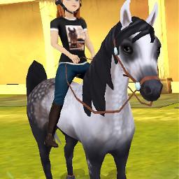 pferd horse