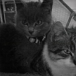 cats twocats oldphoto cute
