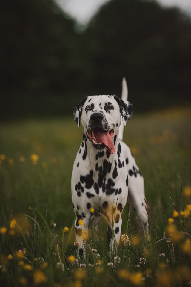 See things differently. Unsplash (lorren francis) #dog #dogs #animal #animals #cute #freetoedit