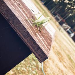 насекомое природа