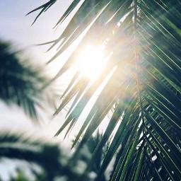 папоротник свет солнце