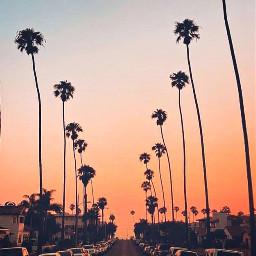 пальмы город эстетика