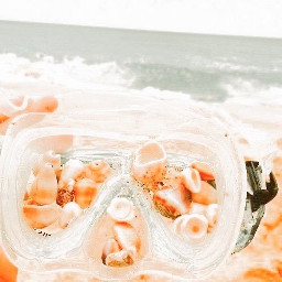 ocean shells beach