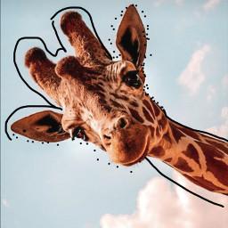 cute_giraffe