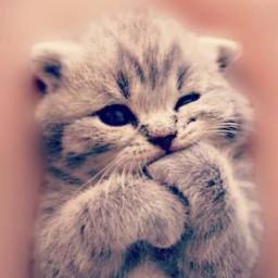 kitten adorable