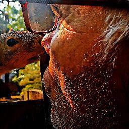 backyard fence squirrelmom kissess