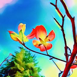 freetoedit flowersinthegarden