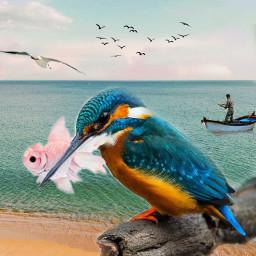 freetoedit srcpinkfishies pinkfishies