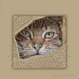 cat pattern texture artisticedit madewithpicsart freetoedit picsart ecanimalprintbackgrounds animalprintbackgrounds