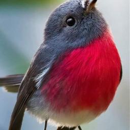 bird local