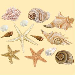 Get,busy,and,create,the,perfect,seashell,sticker,for,this,challenge!,Cover,image,by,@braytoncalderon