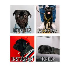 Can,your,pet,do,it,all?,Show,off,how,your,pet,would,embody,these,social,platforms.